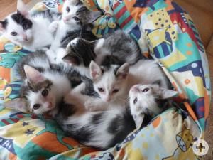 Katzenwuchs